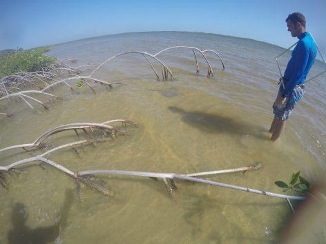 Dr. van der Ham observing seagrass